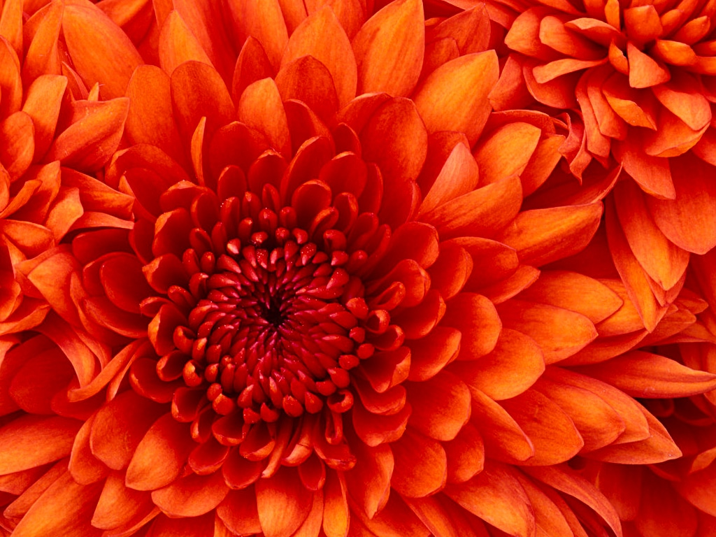 Blühende Blume